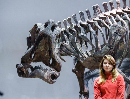 Nueva exposición de fósiles en la ciudad de Buenos Aires