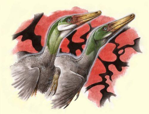 Nuevo estudio sobre los dinosaurios raptores y el origen de las aves