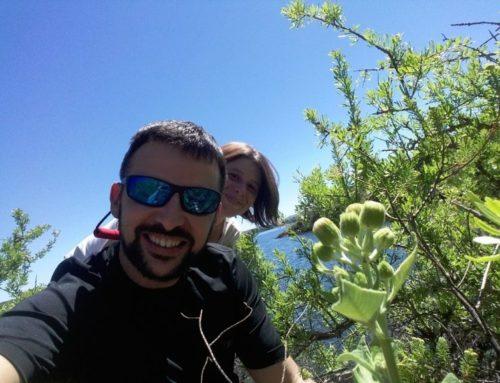 Margaritas de las Sierras Pampeanas y Subandinas: restablecimiento de Austroliabum, género endémico argentino