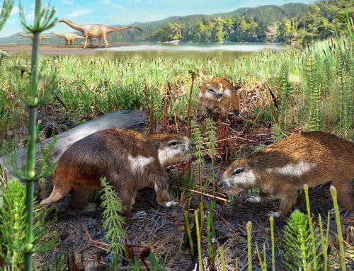 El primer mamífero del Mesozoico de Chile: Magallanodon baikashkenke