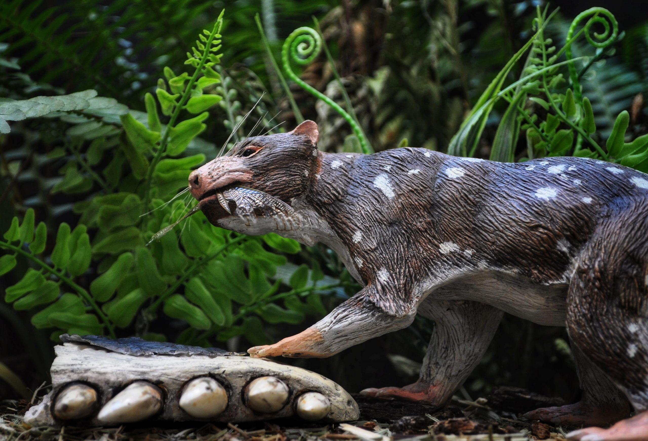 Un nuevo mamífero de la Era de los Dinosaurios en la Patagonia Chilena
