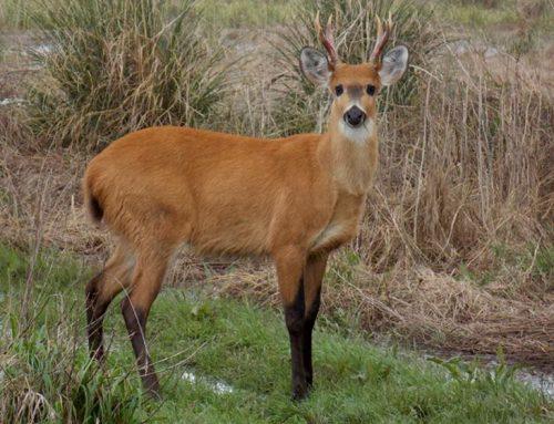 La creación del Parque Nacional Ciervo de los Pantanos tuvo dictamen positivo en el Senado