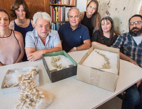 Encuentran en Chubut nidos de abejas de cien millones de años