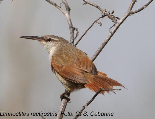 Tras las pistas de las aves restrictas de los humedales pampeanos