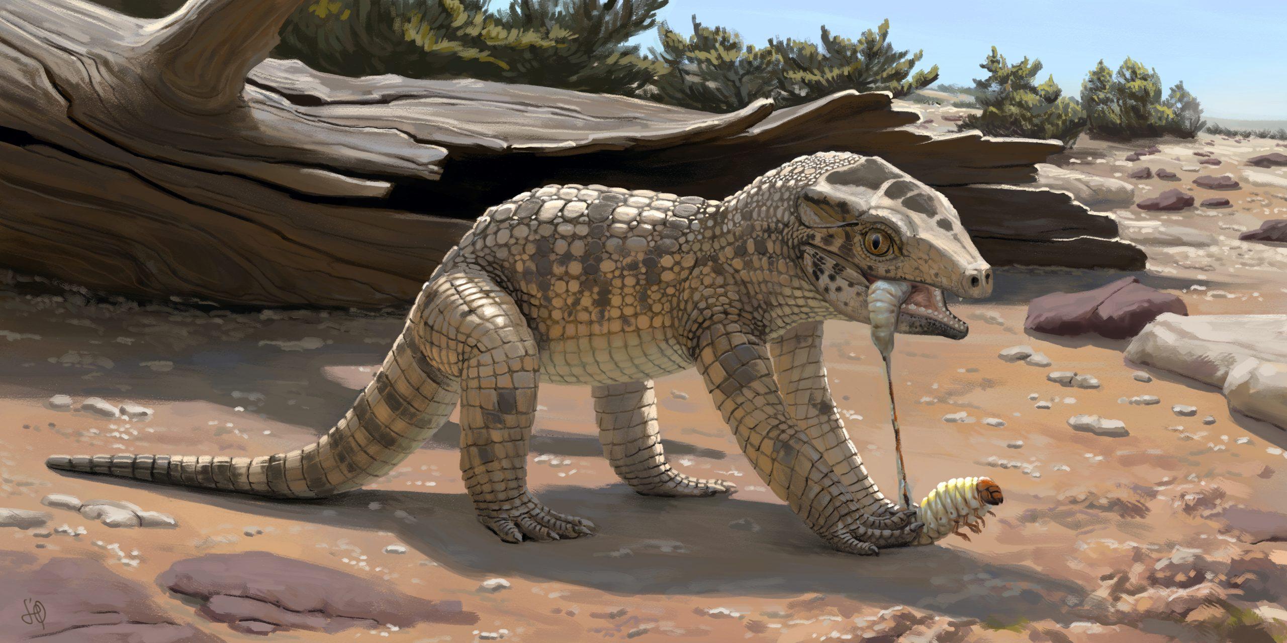 Luego de 55 años de su descubrimiento, se identifica una nueva especie de cocodrilo fósil que vivió en el estado de Minas Gerais, Brasil, hace unos 80 millones de años atrás