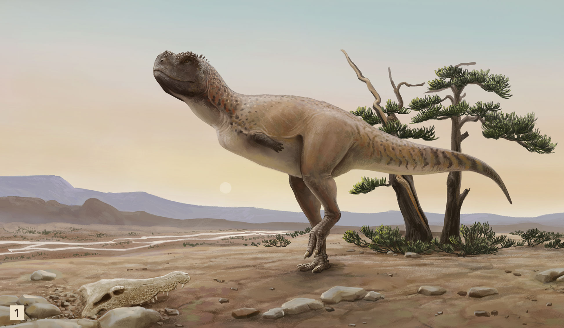 Kurupi itaata – Un dinosaurio abelisaurido del final de la Era Mesozoica en Brasil