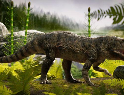 Reconstruyen el esqueleto de un antepasado del cocodrilo que vivió en la Argentina hace 225 millones de años