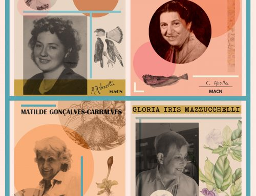 Edición 2020 del Ciclo Pioneras: las científicas del Museo Argentino de Ciencias Naturales