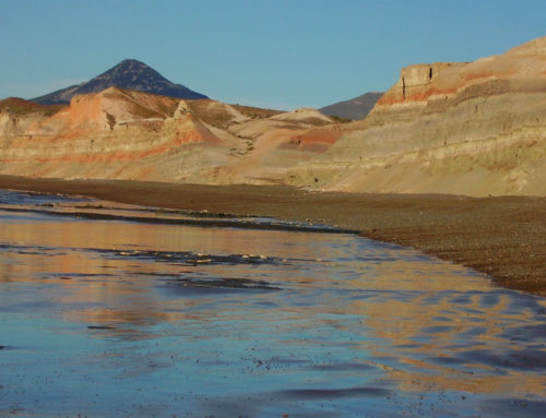 Hallan una rana patagónica de 60 millones de años conservada en una egagrópila fosilizada