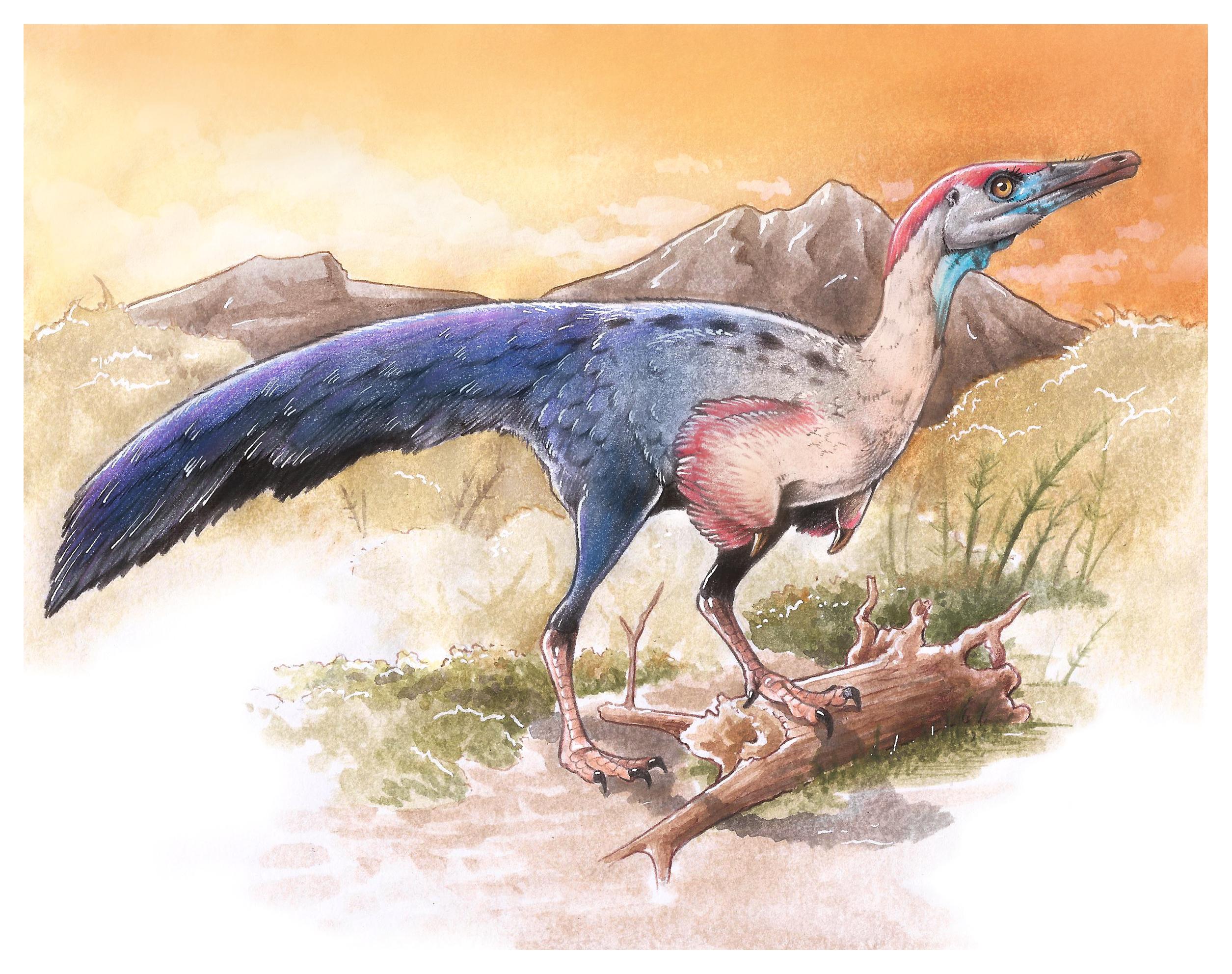 Investigadores argentinos estudian un dinosaurio de China