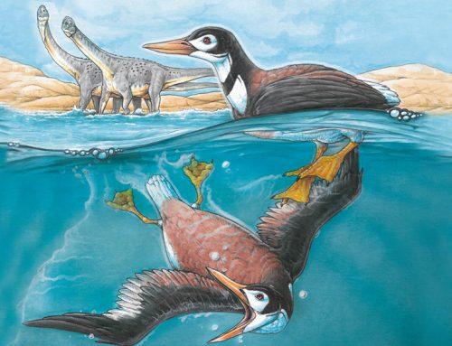 Describen por primera vez una familia de aves modernas que convivió con los dinosaurios