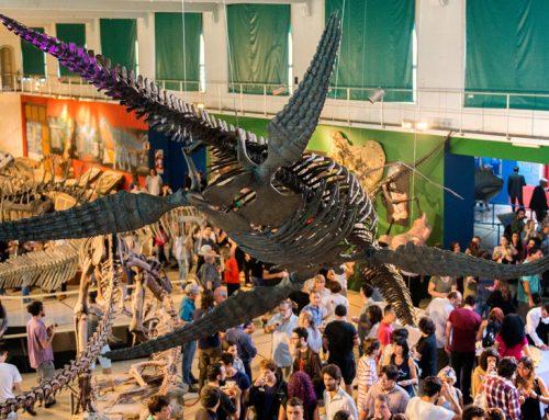 Presentaron en el MACN el esqueleto de un nuevo Plesiosaurio