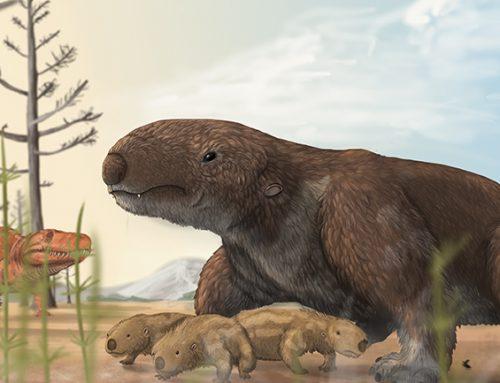 El registro mas antiguo de dentición hipsodonte, en un cinodonte del Triasico de Brasil.