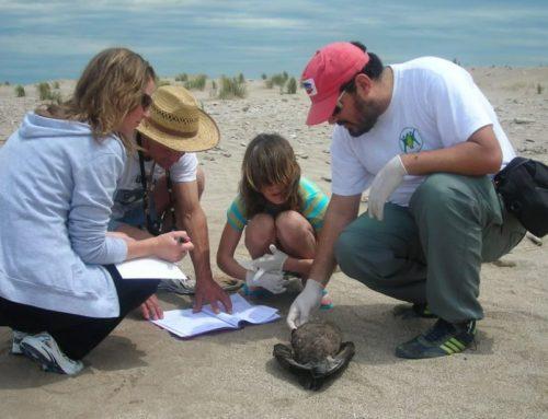 Premian un programa argentino para detectar fauna marina muerta a través de una App