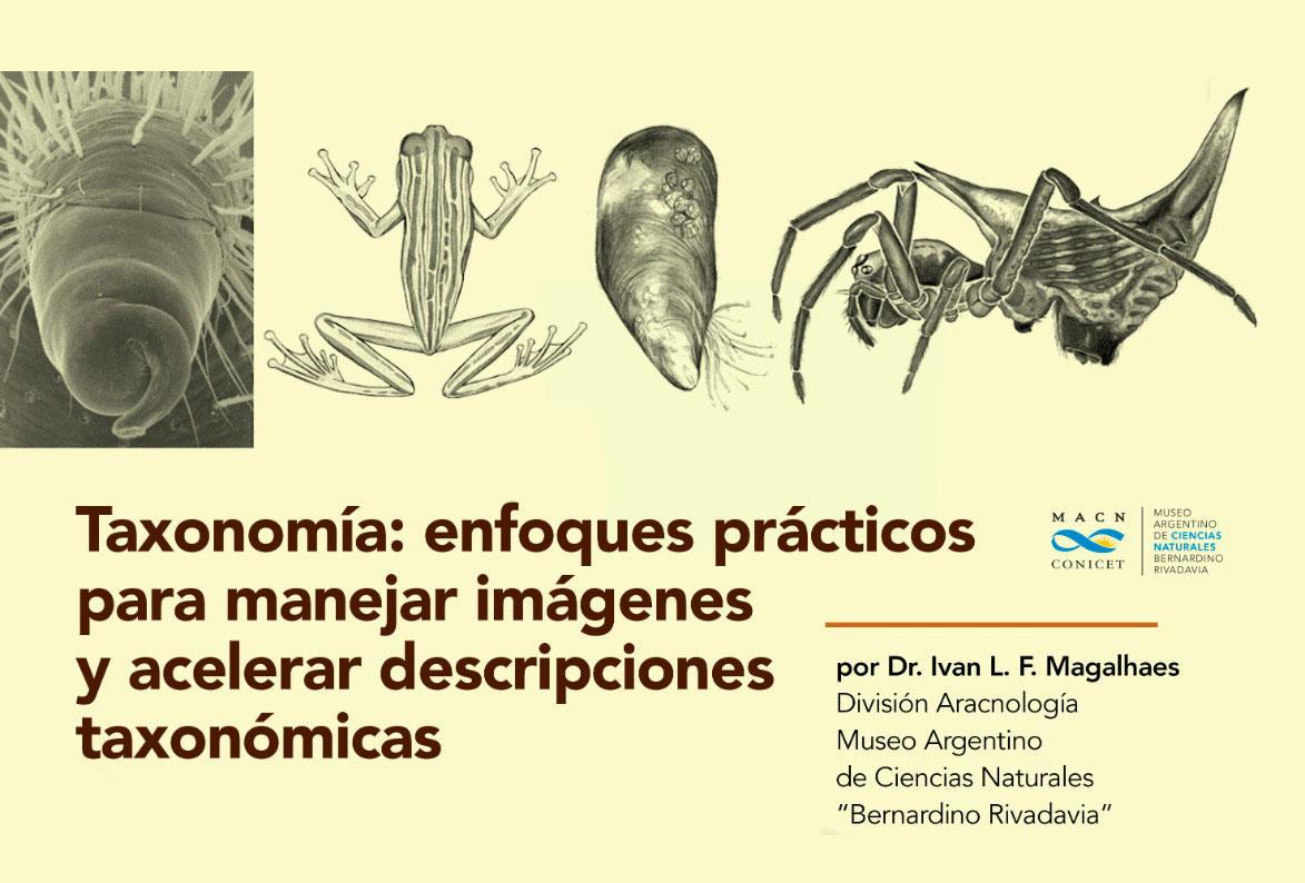 Taxonomía: enfoques prácticos para manejar imágenes y acelerar descripciones taxonómicas