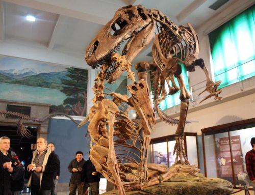 Megaraptor namunhuaiquii, un nuevo integrante de la exhibición de paleontología.