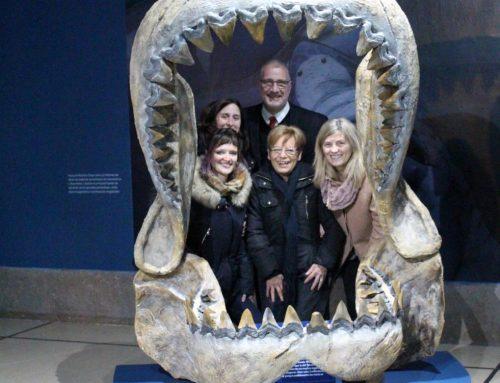Tiburones, rayas y quimeras