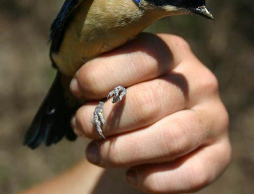Evolución de las aves selváticas sudamericanas