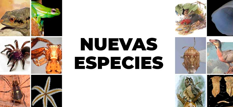 Nuevas especies 2020