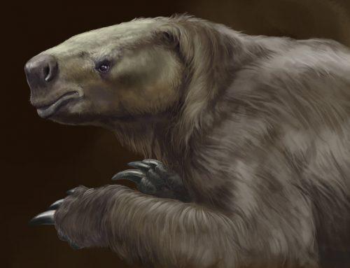 Los perezosos de la prehistoria no eran tan lentos como los actuales