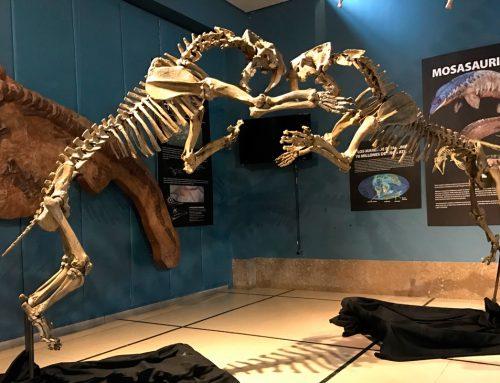 Donación de replicas de fósiles para el Museo Nacional de Brasil