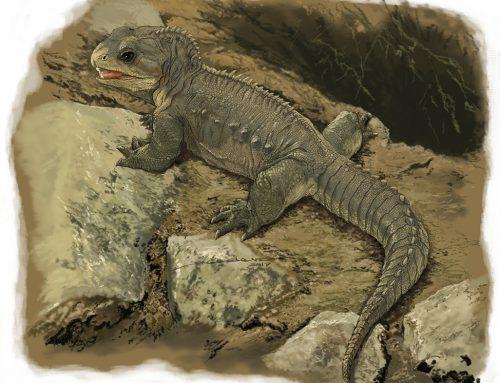 A la sombra de los dinosaurios: un nuevo esfenodonte de Brasil es el más antiguo de Gondwana